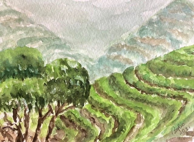 #doodlewashmarch2021 day 11 tea: On a tour of South Korea, we visited this tea plantation where the