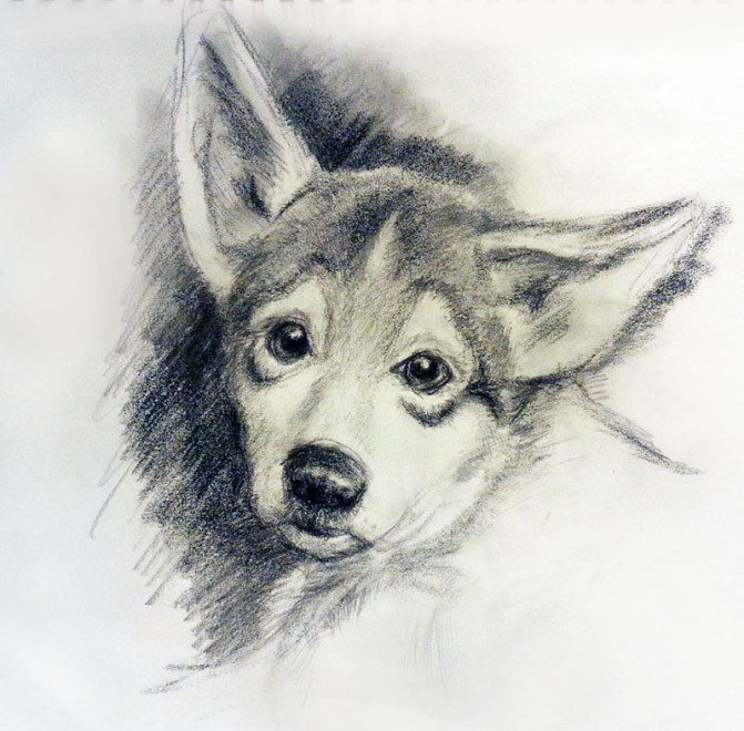 Puppy Drawing by Eva Smith