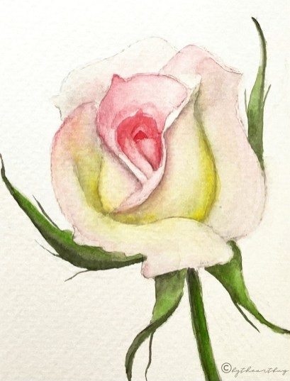 White Rose With Pink Watercolor Painting by The Art Bug