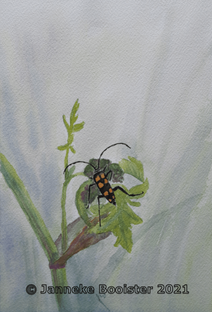 Longhorn beetle. Watercolour on Arches paper. I hope to show the beauty of insects as they need all