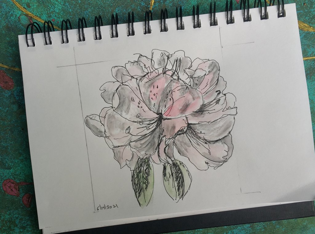 "Playing in my 5×8"" sketchbook; Rhododendron in Ink, water soluble graphite and light wc wash"