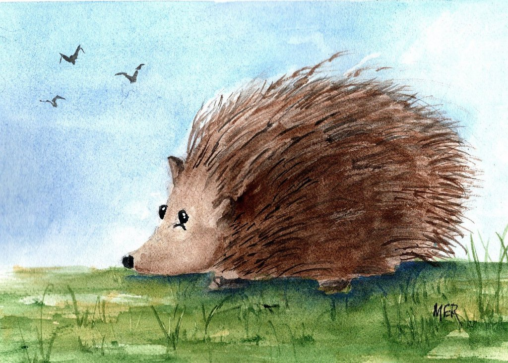6/6/21 Hedgehog 6.6.21 Hedgehog img001