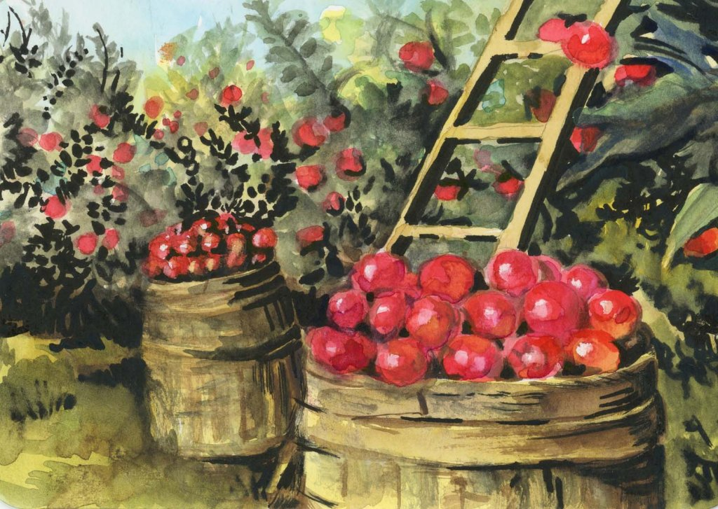 #DoodlewashJune2021 prompt: Basket. Okay, so apples are gathered in barrels not baskets. But they bo