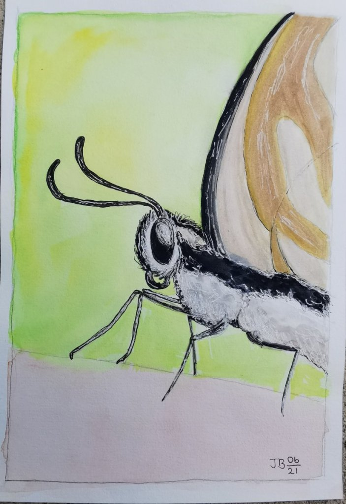 Moth in watercolor. Not my best work, but onward and upward! IMG_20210617_100016