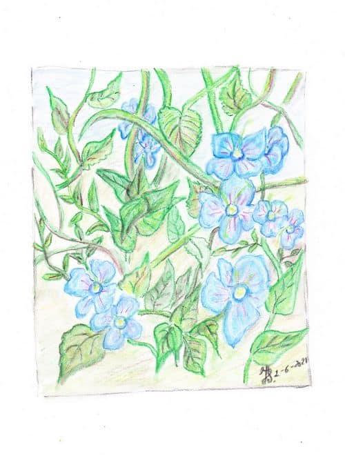 a painting of little blue flower i found in the grass. littleblueflowersklein