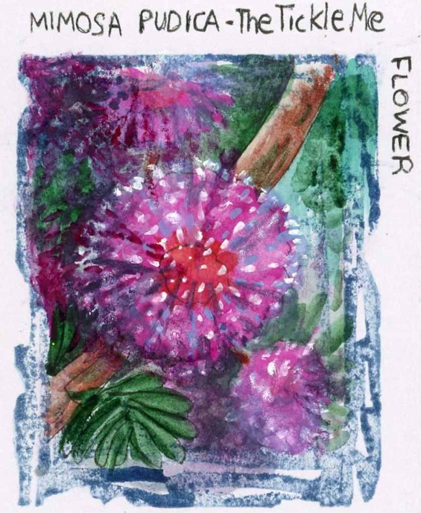#WorldWatercolorMonth2021 Prompt: Mimosa pudica is the 'tickle me' plant. Pen: Zebra Zen
