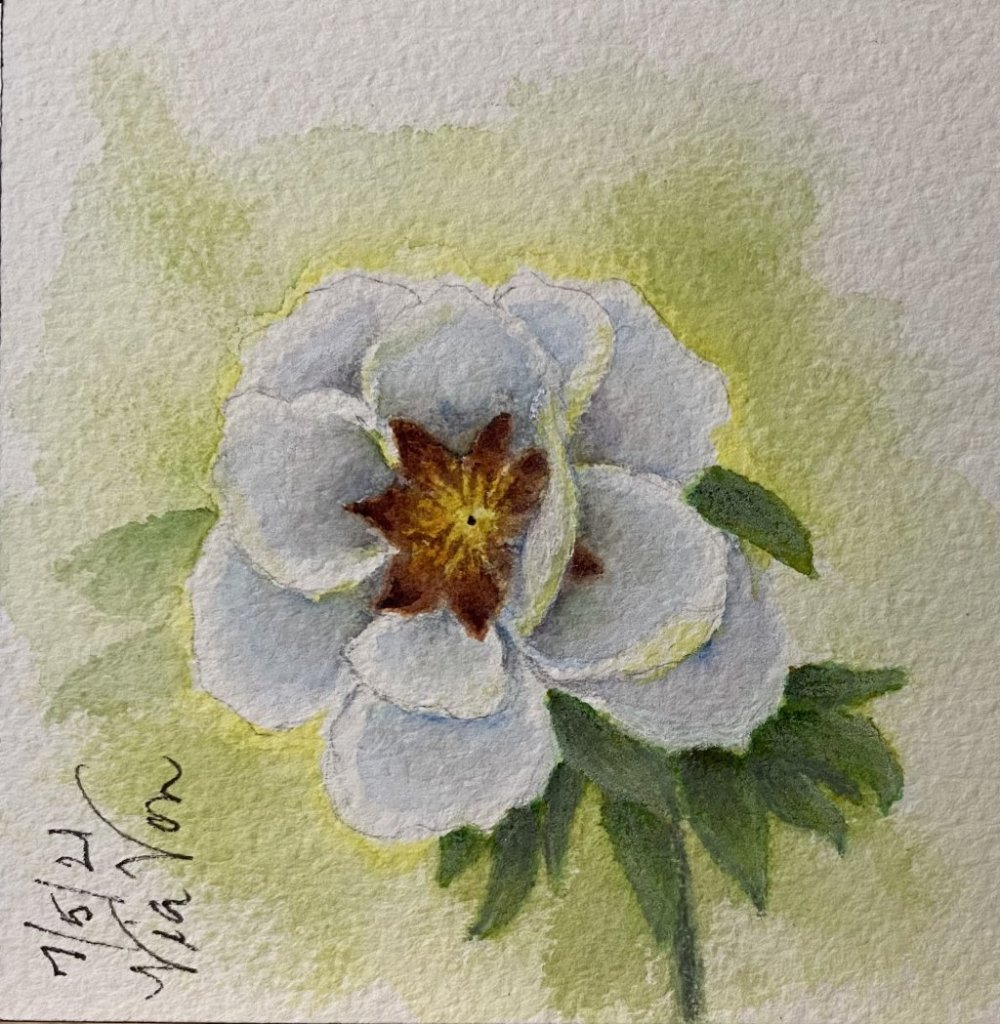 """Peony Practice from """"The Flower Painter's Pocket Palette Book2""""! Done in Watercolours on Arche"""