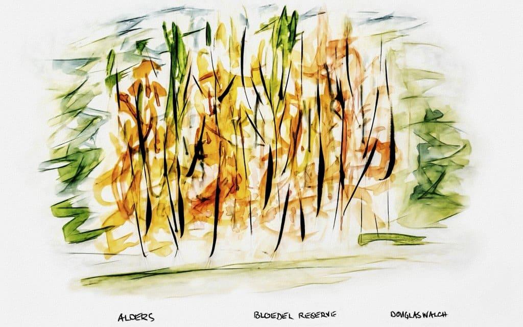 Pen & Ink, Watercolors Alders, Bloedel Reserve