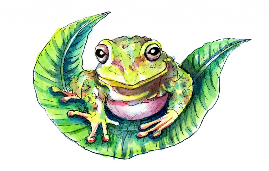 Frog On Leaf Watercolor Illustration Painting
