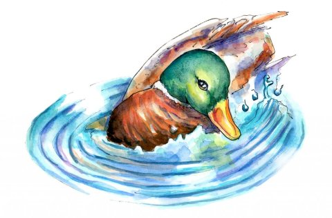 Mallard Duck Swimming Ripple Effect Water Watercolor Illustration Painting