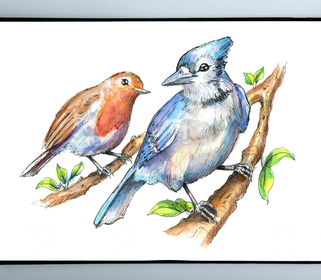 Two Birds Blue Jay English Robin Watercolor Illustration Painting Sketchbook Detail