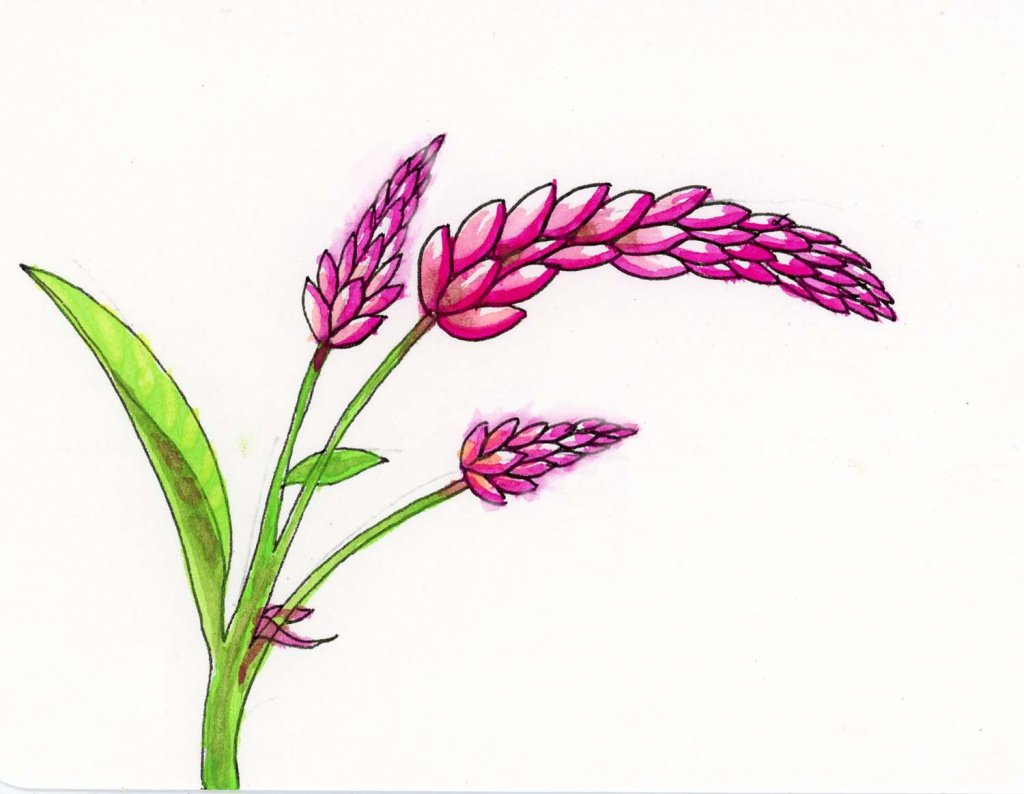 Prompt: Feathered. I did one version of the Flamingo Feather Celosia for my WWM flowers and one as p