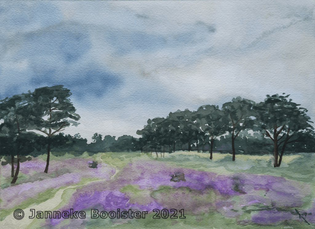 Kalmthoutse Heide (Belgium) end of August watercolour on Arches paper I love this time of the year,