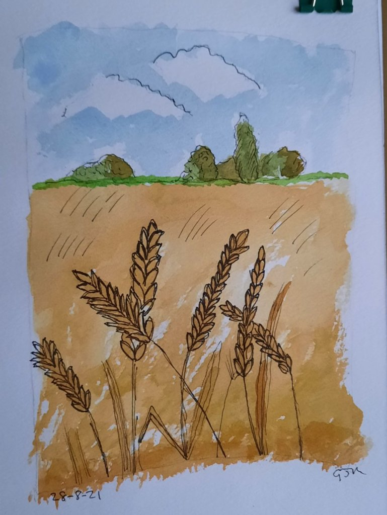 #doodlewashaugust2021 Day 28 Wheat Field. #worldwatercolorgroup #lineandwash 20210828_190816