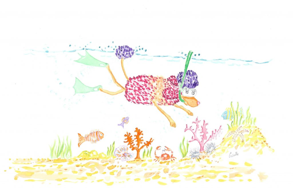 Fifi snorkeling… Fifi snorkeling