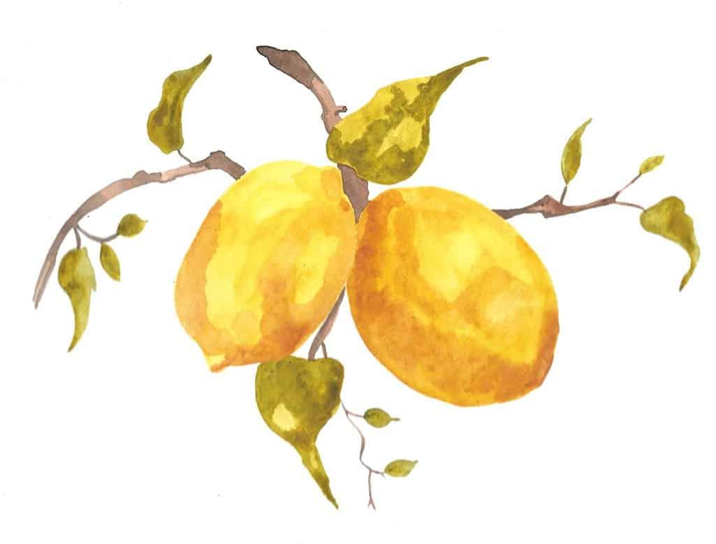 watercolor lemons on lemon tree