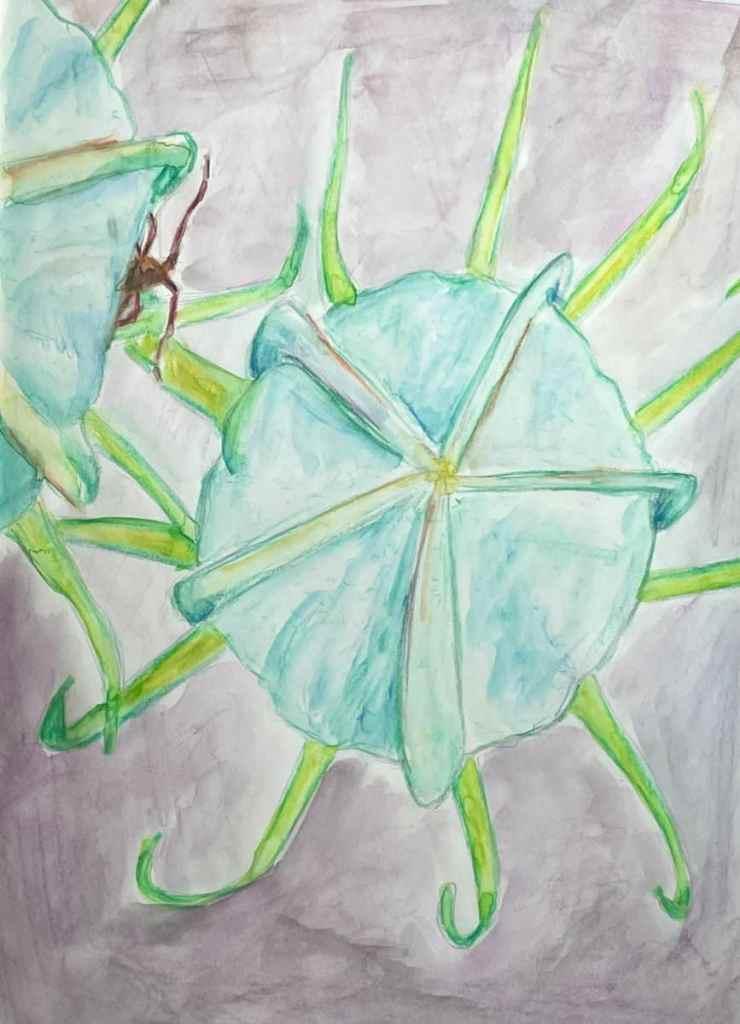 Watercolor pencils on midori paper ths peekaboo