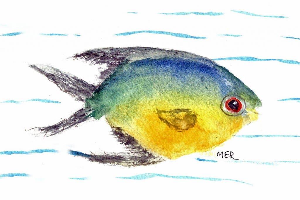 9/20/21 Fish 9.20.21 Fish img001
