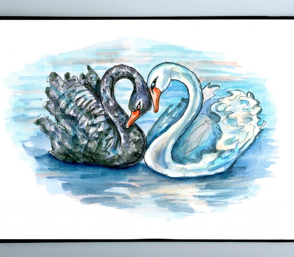 Black Swan And White Swan Two Swans Love Watercolor Illustration Sketchbook Detail