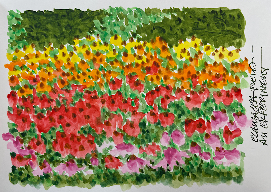 A fast Monet-insprired field of echinacea flowers… W21 9 9 NOST ECHINACEA-2311