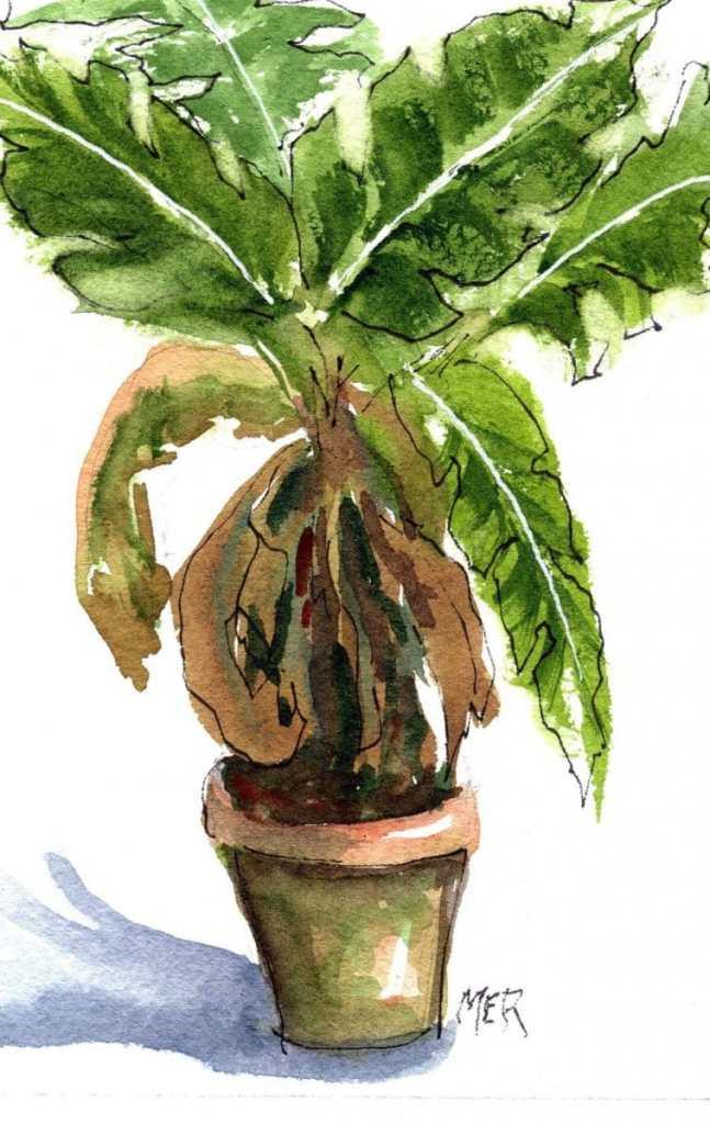 10/20/21 Plant 10.20.21 Plant img001