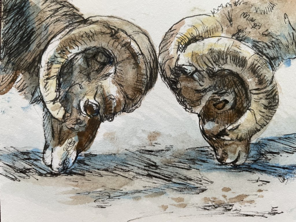 * #DoodlewashOctober2021: Ram. * #Inktober2021: Collide. Did you know that scientists study rams hop