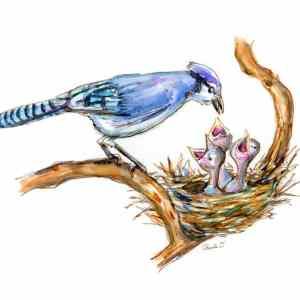 blue jay feeding baby birds image detail