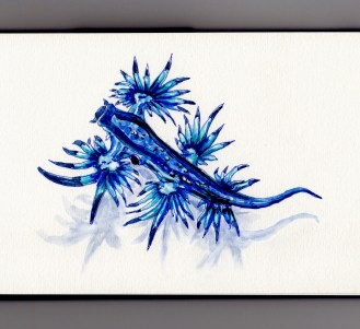 Glaucus Atlanticus Doodlewash Blue sea swallow, blue angel, blue glaucus, blue dragon, blue sea slug and blue ocean slug watercolor illustration