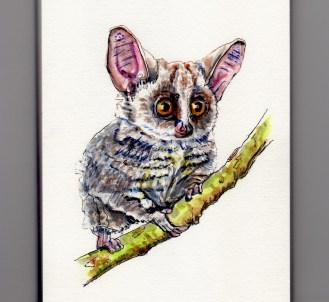 Galago - Doodlewash watercolor painting sketch illustration of African bushbaby bush baby nagapie