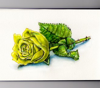 A Yellow Rose Doodlewash and watercolor sketch of rose and leaves color means friendship