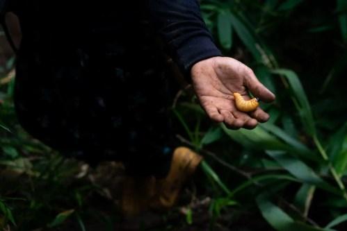 La giungla dei Lahu| ©Marco Barbieri, 2018