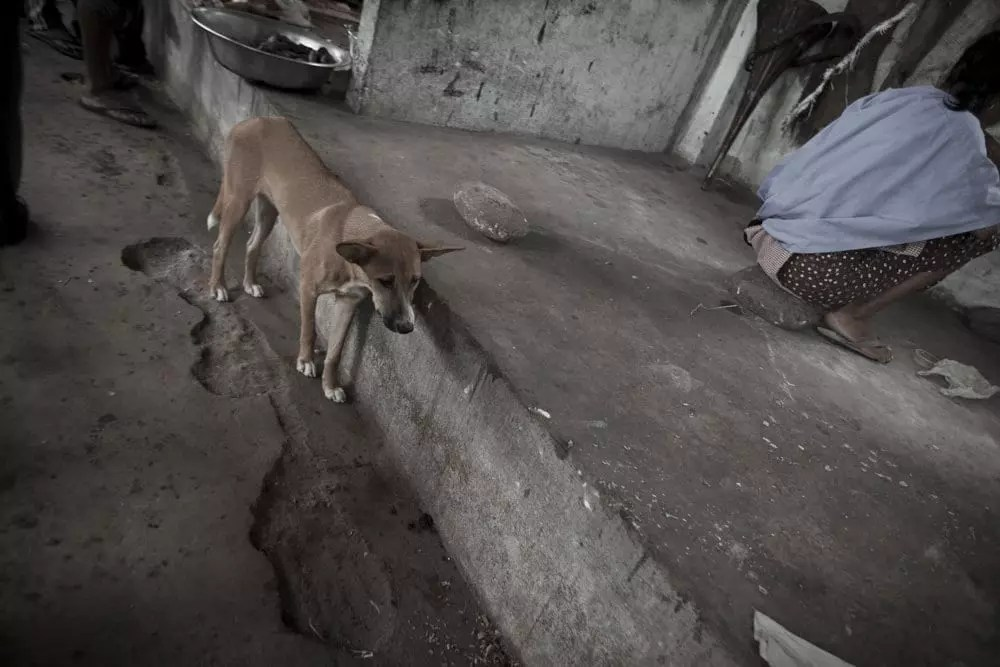 India | ©Gabriele Orlini, 2011