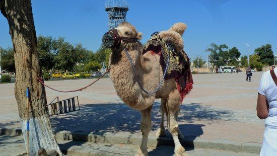 Arc Citadel Camel
