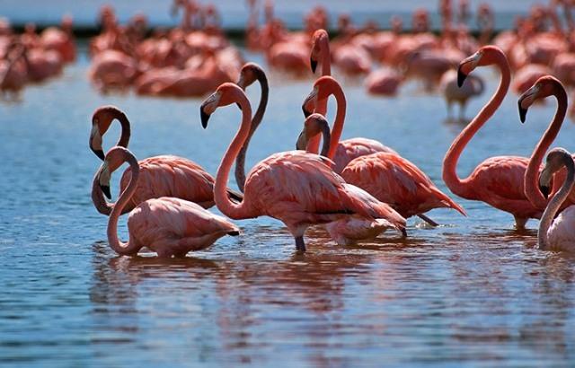 Korgalzhyn Nature Reserve Flamingo