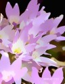 Doon art purple flower blur
