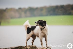 Collie by the lake in marbury park
