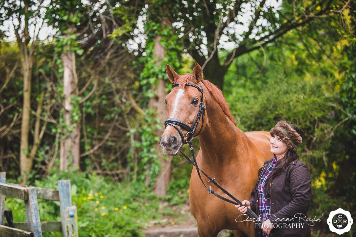 a chestnut horse looking shiny on a photo shoot