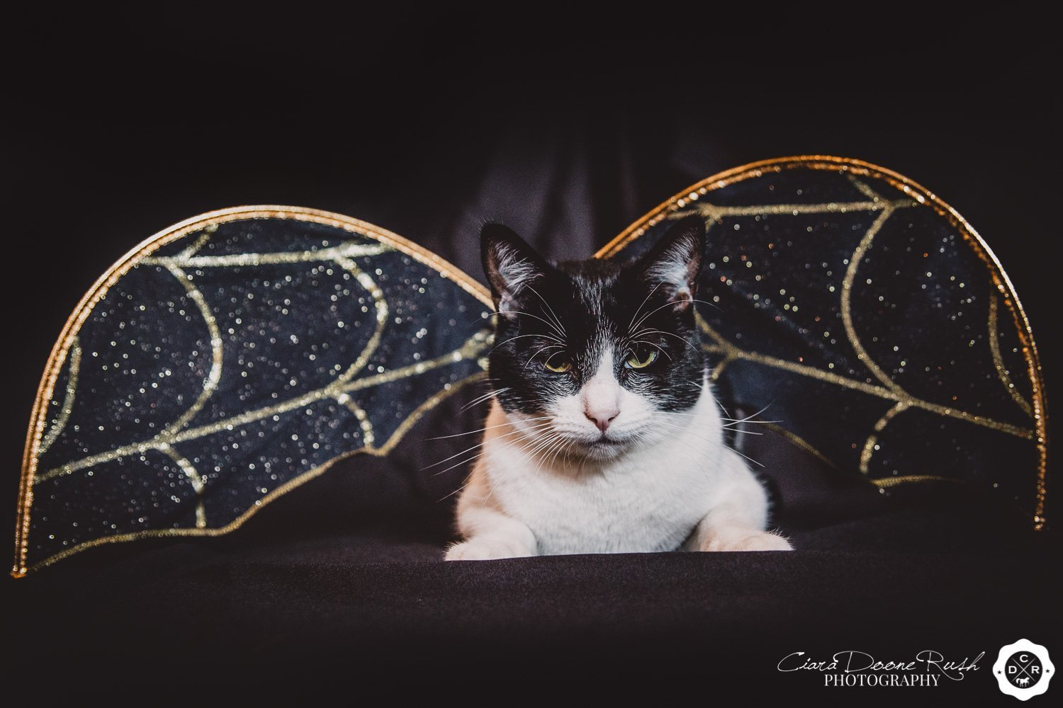 Barry the Halloween Cat