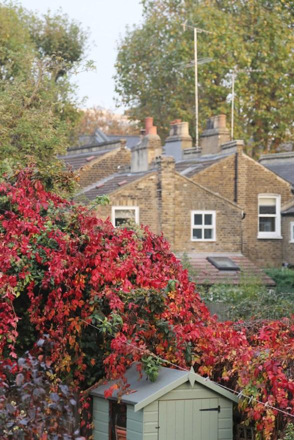 161104-autumnincamberwell