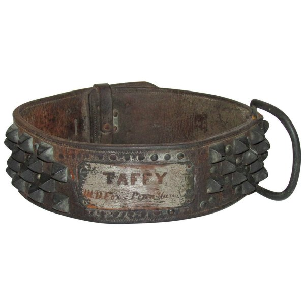 Rare Antique American Large Spiked Leather Dog Collar