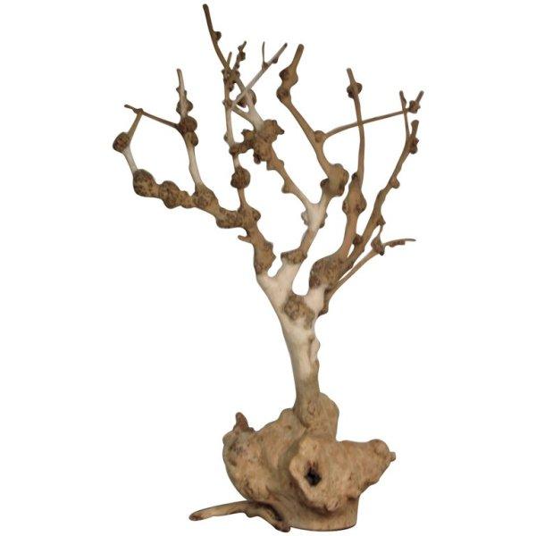 Antique Burl Tree Natural Sculpture