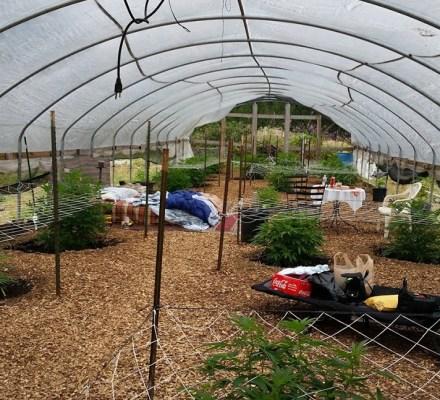 I Spent The Night In Farmer Tom's Greenhouse