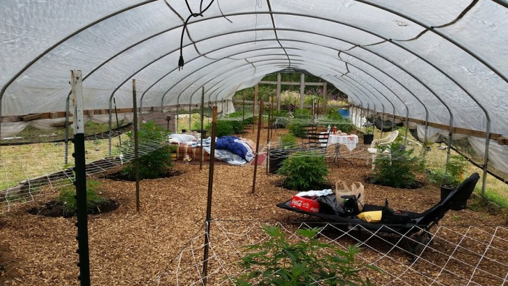 I Spent The Night In Farmer Tom's Greenhouse
