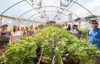 Review: Bang's Cannabis Company