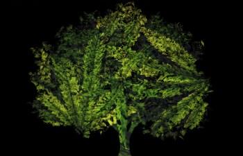 The Future of Cannabis As A Cash Crop