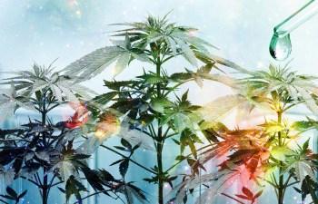 Medical Monday: State of Marijuana: Prop 64 1