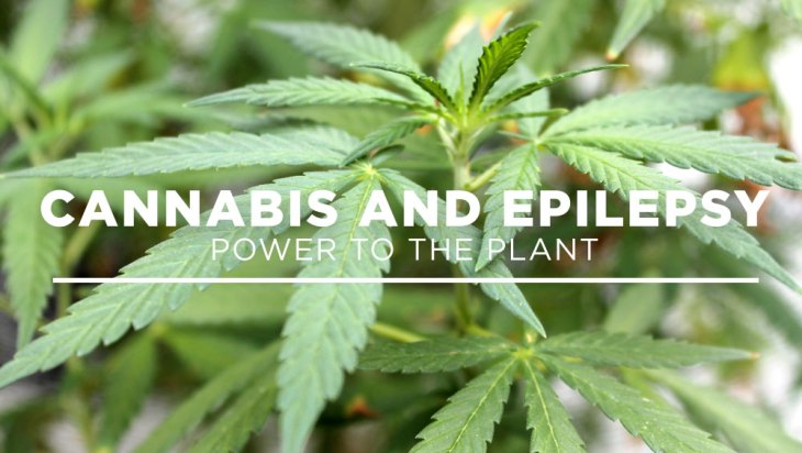 Medical Monday: Cannabis and Epilepsy Pt. 2: Power to the Plant