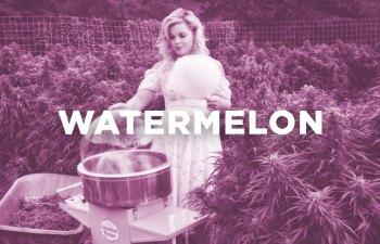 Chef Feature: Watermelon