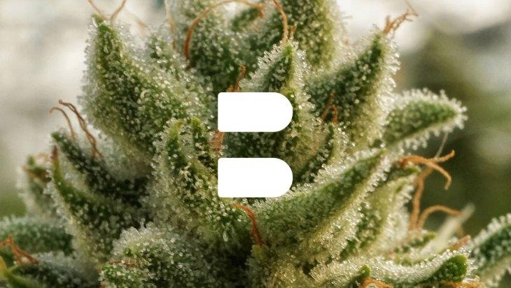 Branding Dope: Burnwell 5