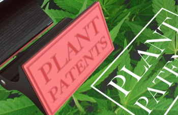Plant Patents: A Love-Hate Relationship